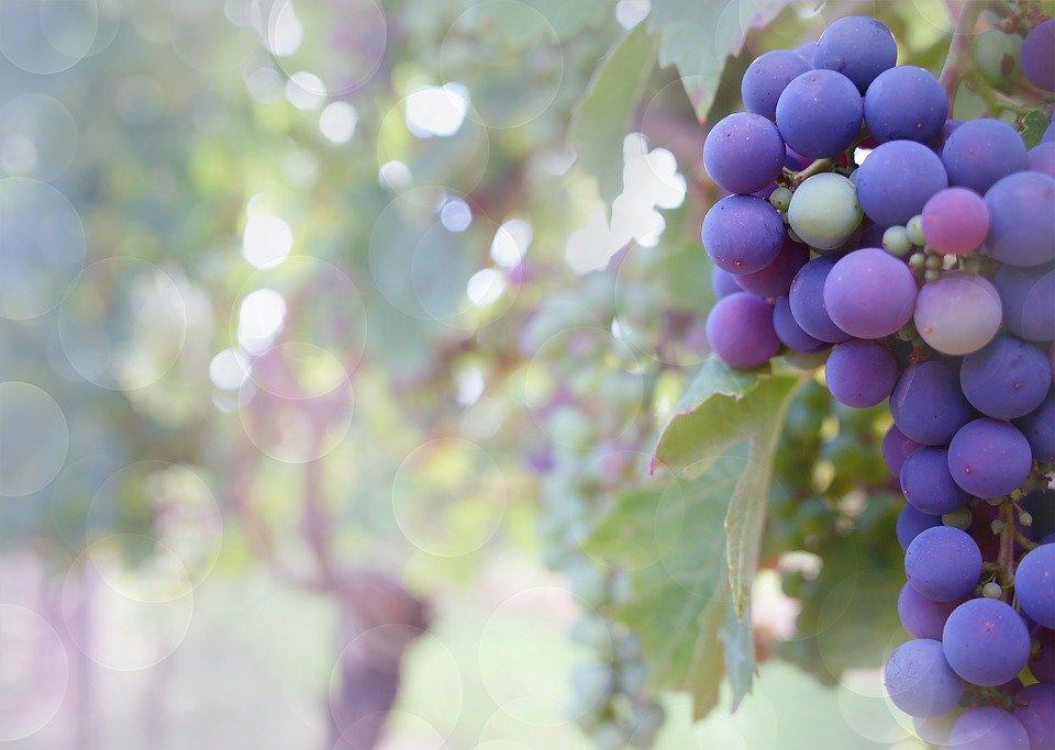 Programación Fiestas del Vino Valdepeñas 2019 - Parte I