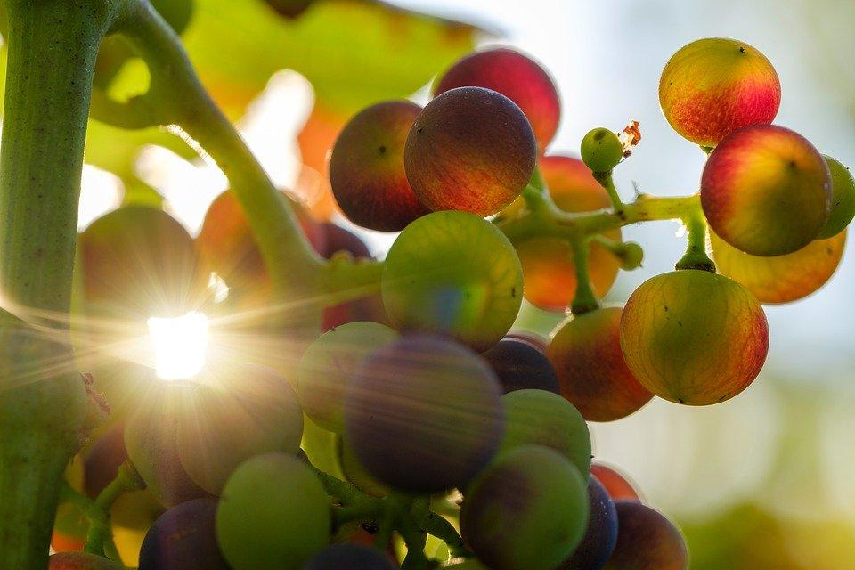 Programación Fiestas del Vino Valdepeñas 2019 - Parte II